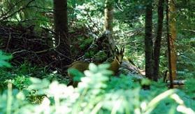 La Forêt de la Serre