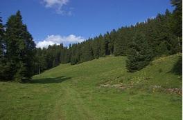La Forêt du Massacre