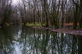 La forêt de Chaux