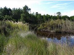 Les sentiers des étangs